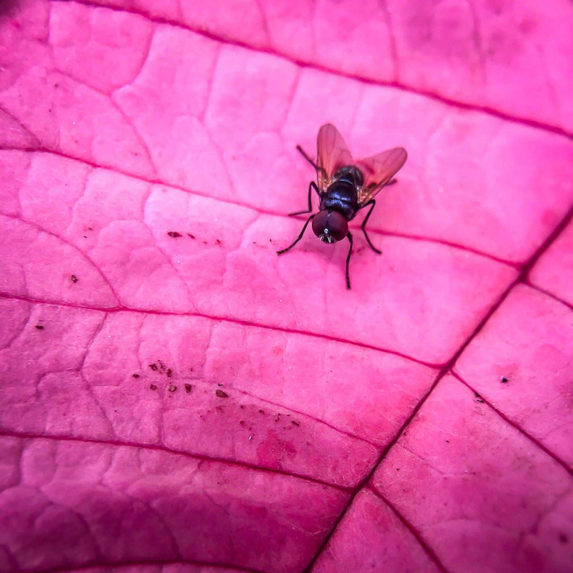 Closeup Macro iPhone Photos 26 no script