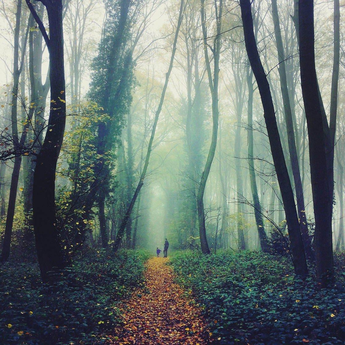 Fog & Mist iPhone Photos 23 no script