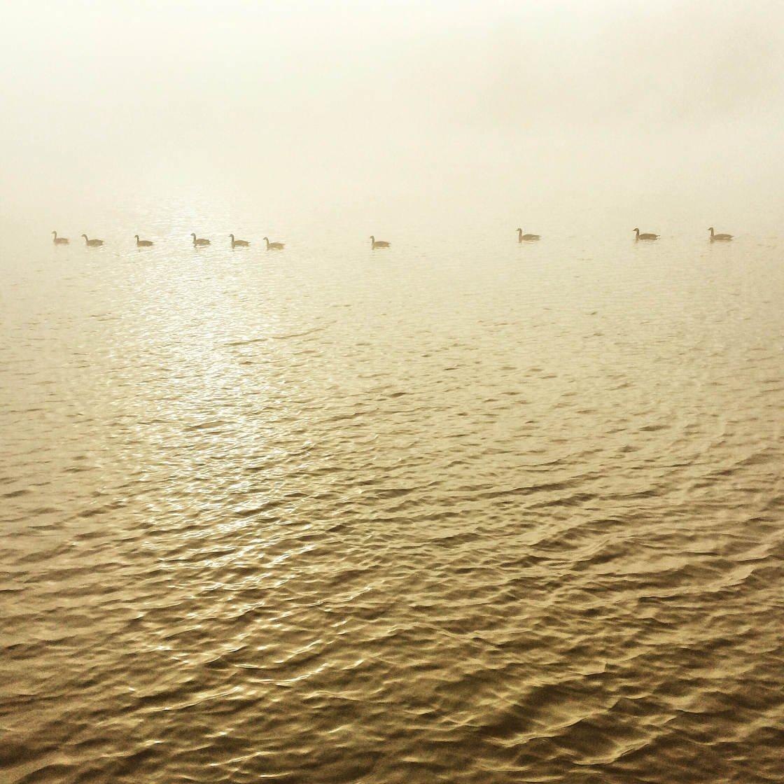 moody landscape photography no script