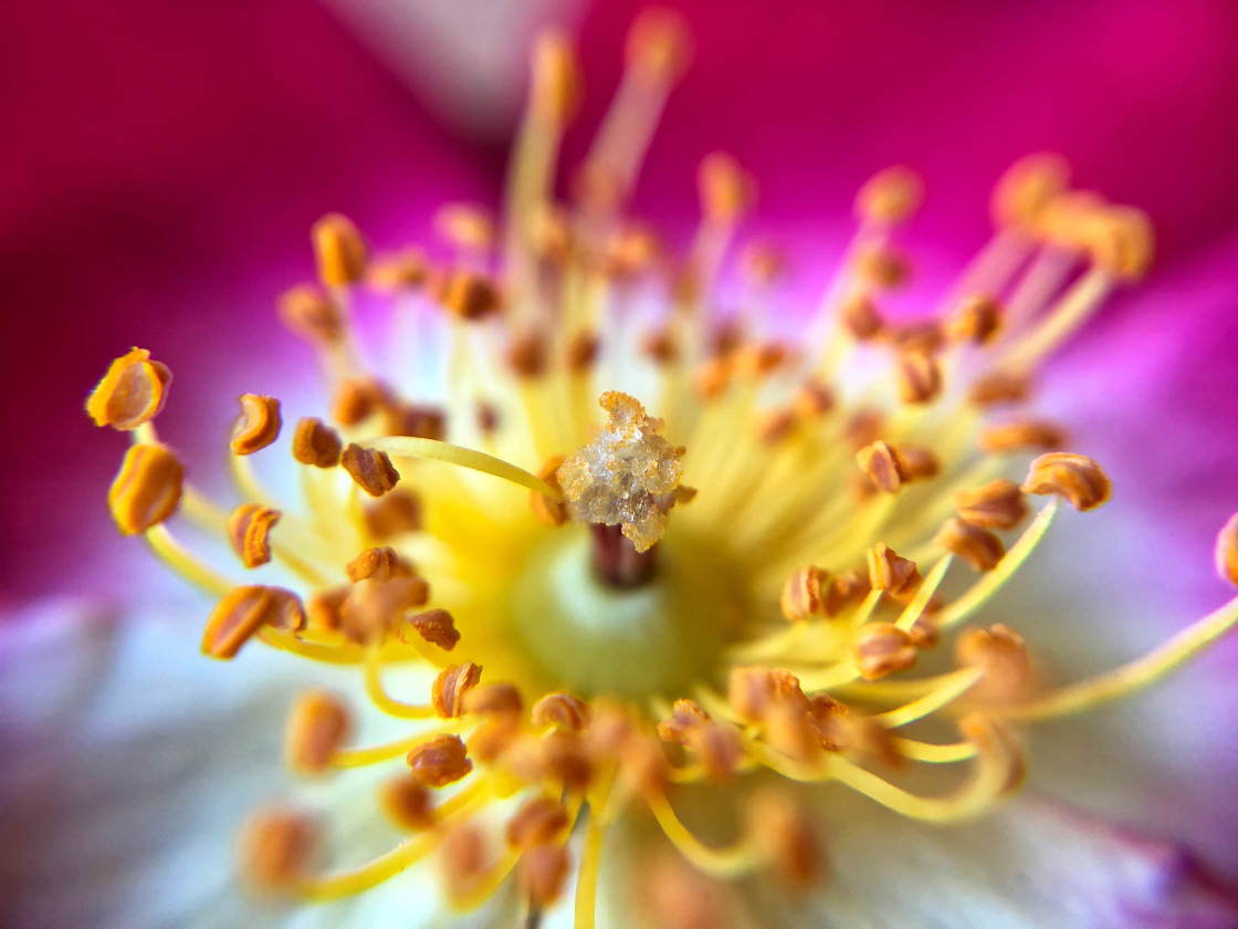 flower macro photography