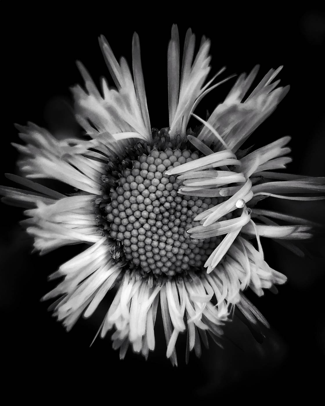 nature macro photography no script
