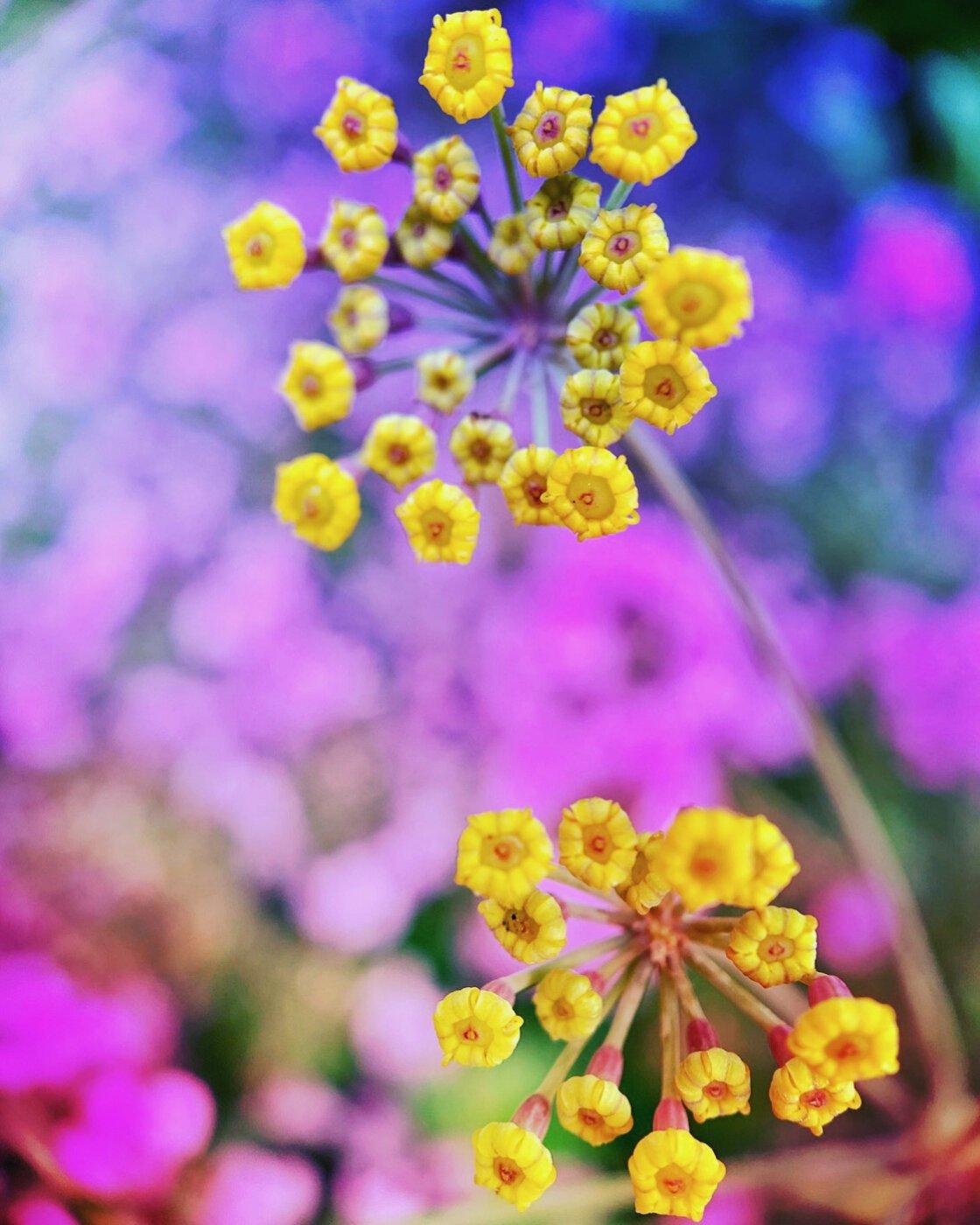flower photography no script