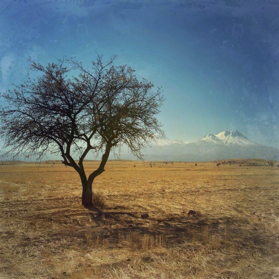 iPhone Photo of a Tree no script