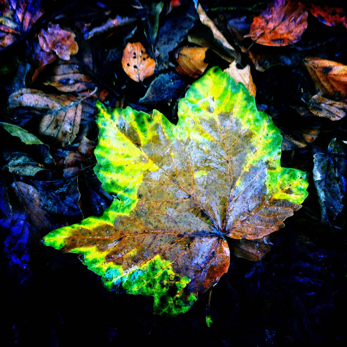 iPhone Photos of Leaves 26 no script