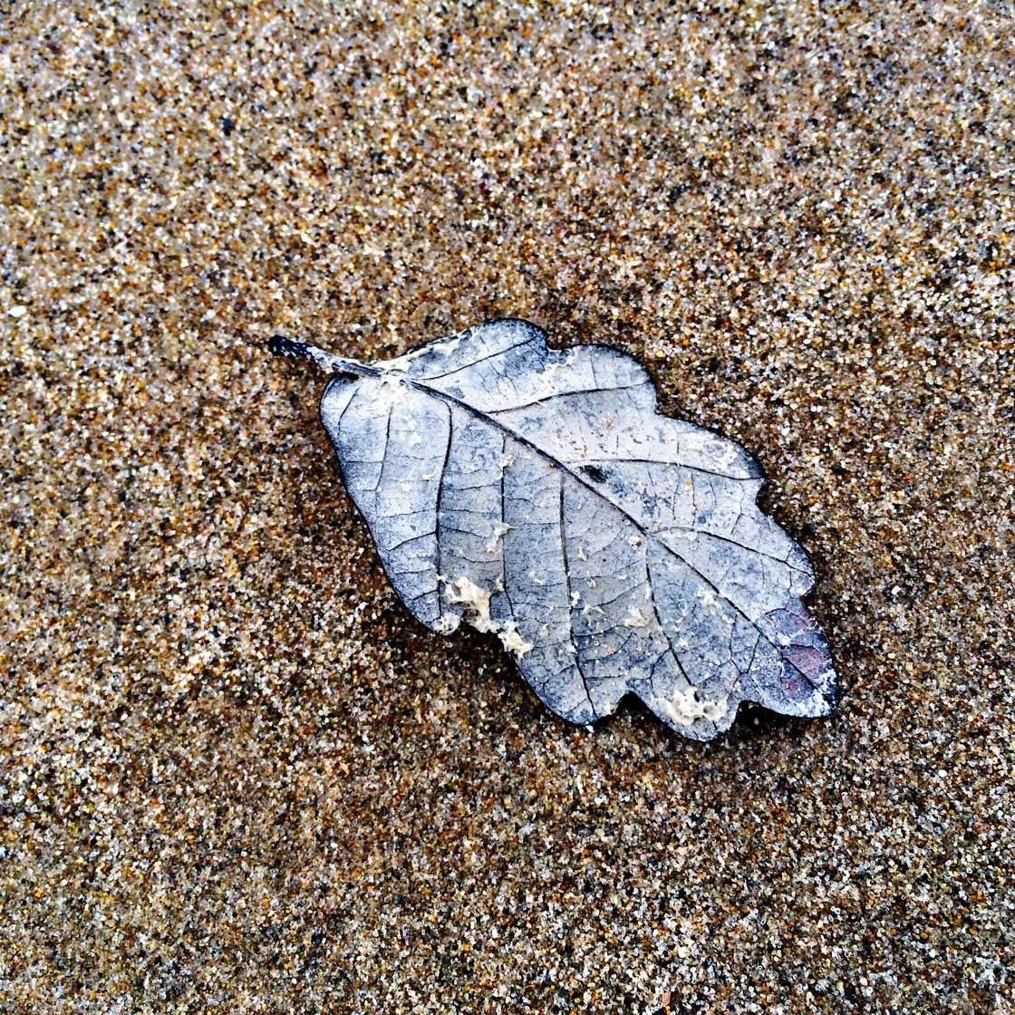 iPhone Photos of Leaves 20 no script