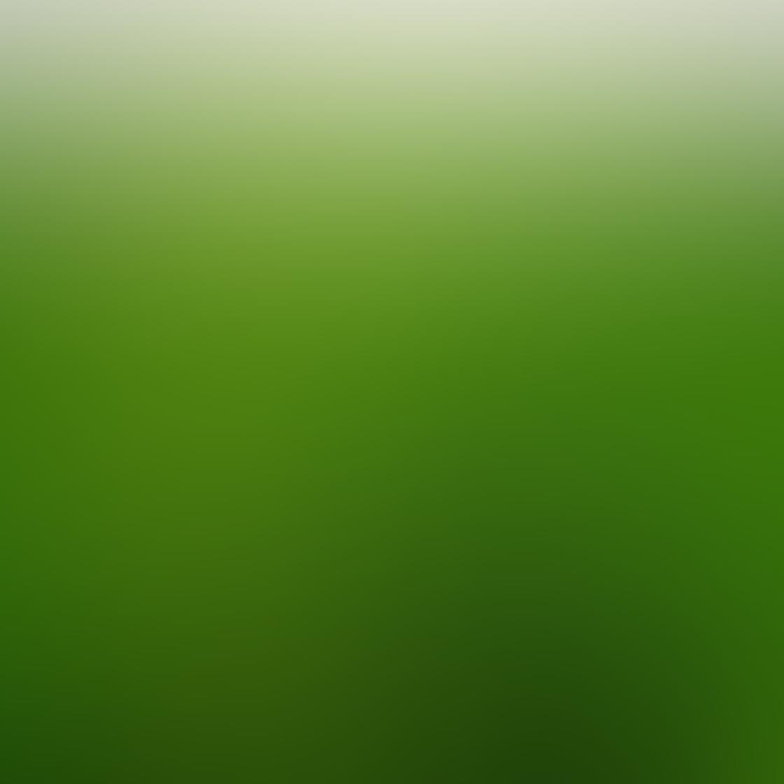 iPhone Photos of Plants 25