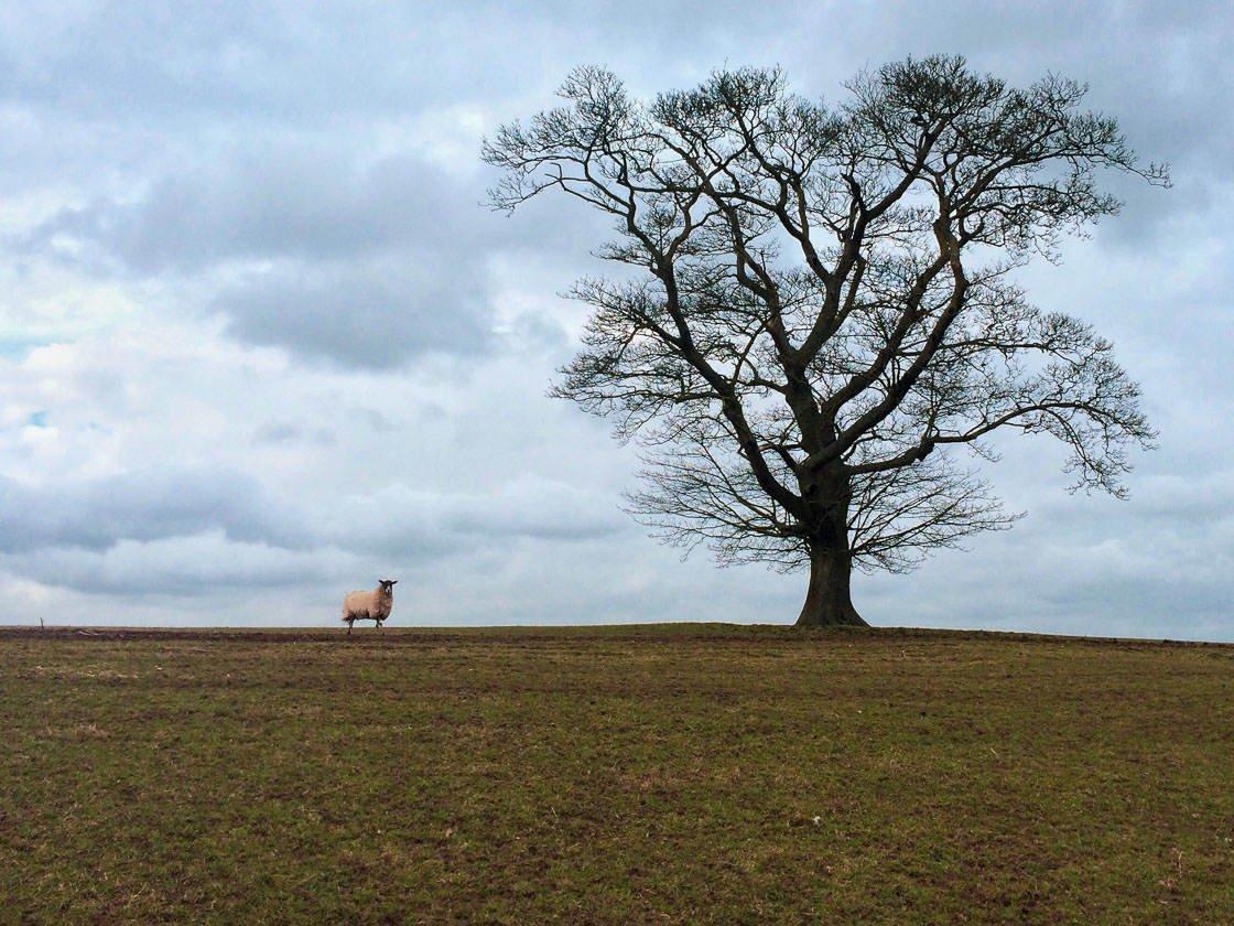 Landscape photography 36 no script