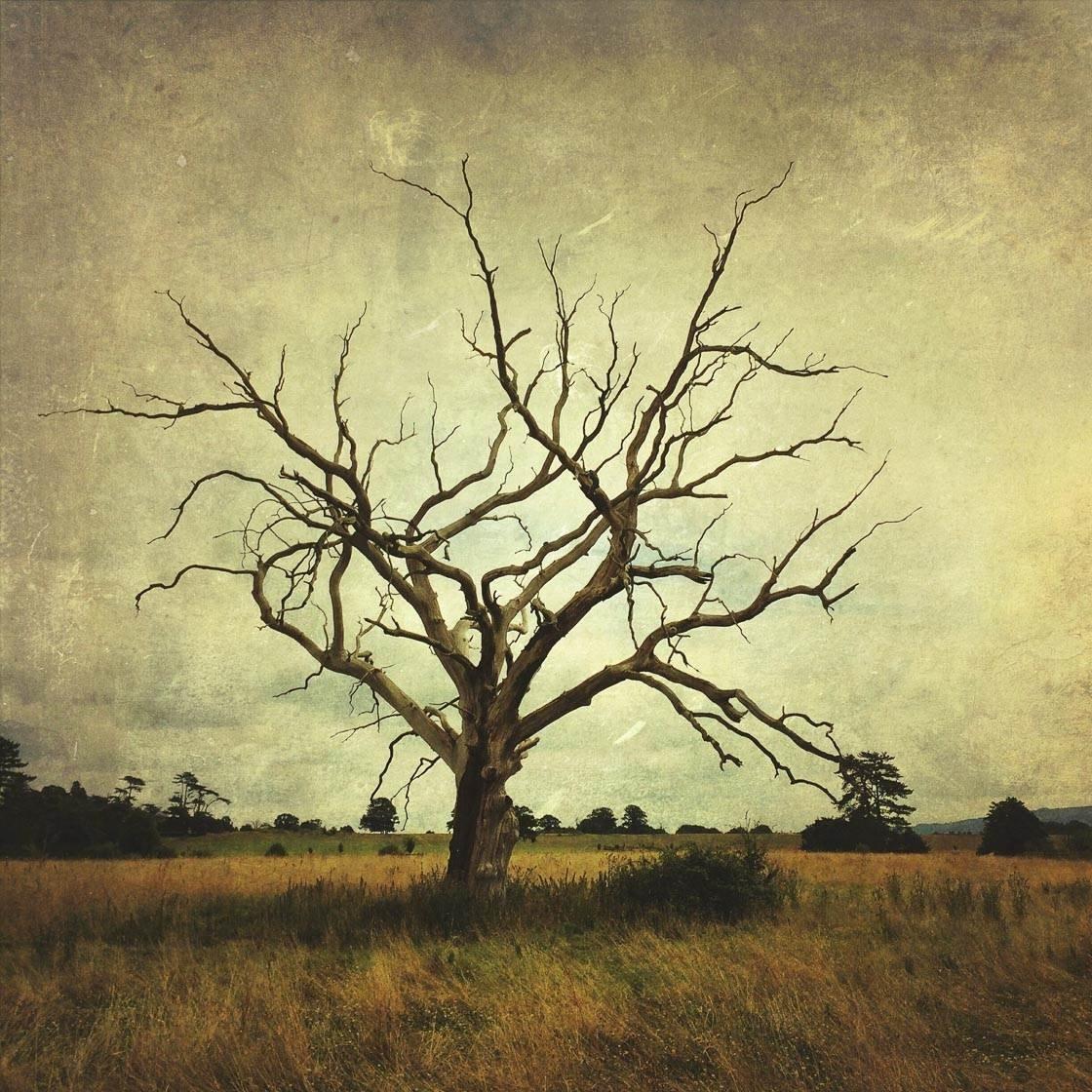 Landscape photography 46 no script