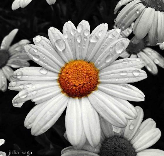 iPhone Flower Photo 06 no script