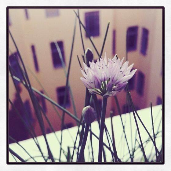 iPhone Flower Photo 14 no script