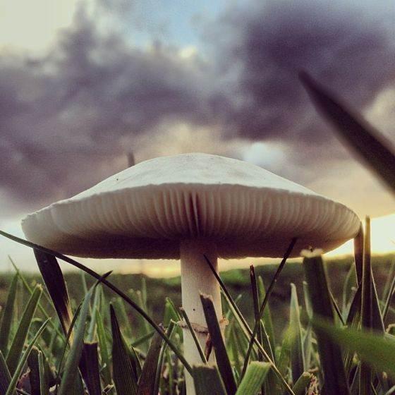 iPhone Nature Photos 10