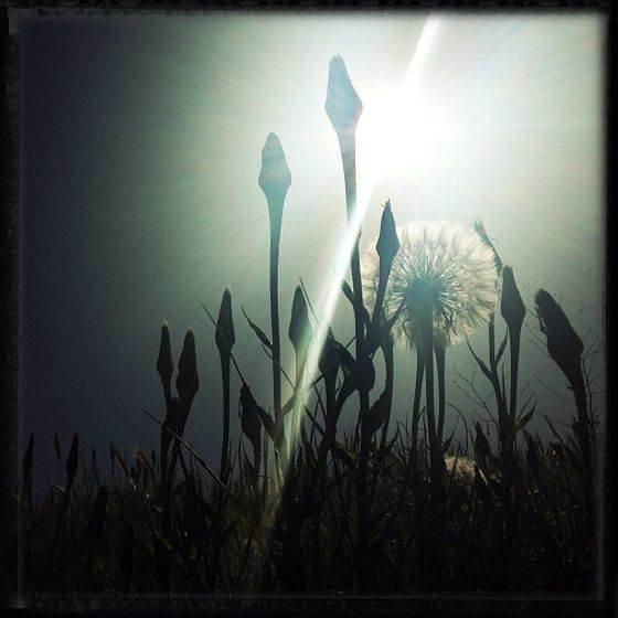 iPhone Sun Photo 24 no script