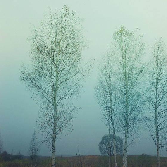 iPhone Photo of Seasons 10 no script