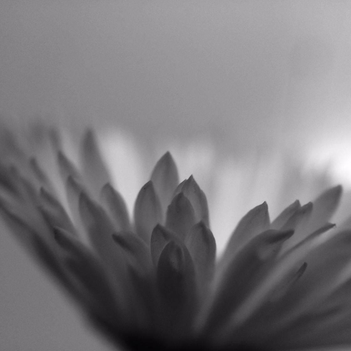 Minimalism Pihone Photography 13 no script