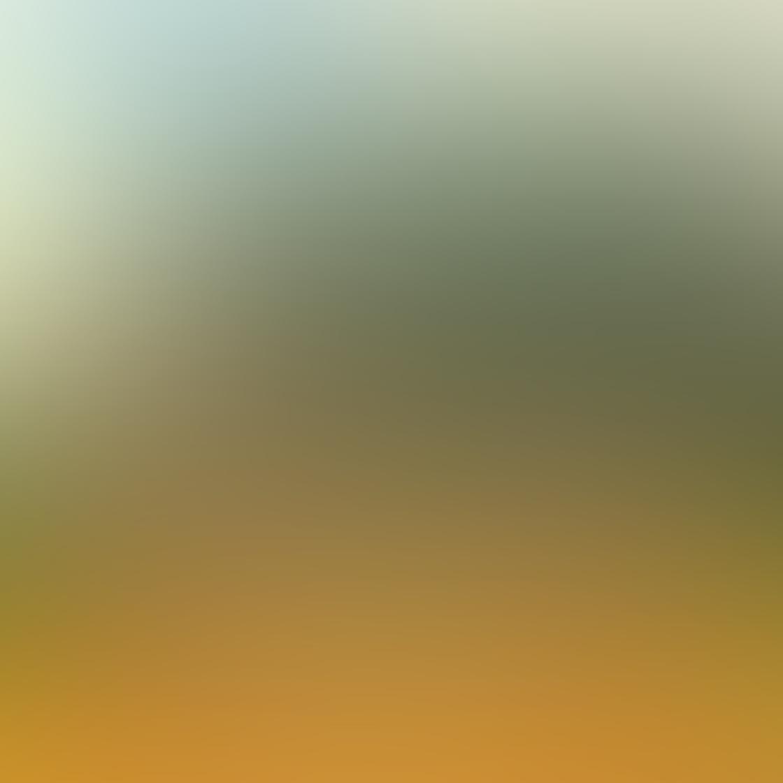 iPhone Tree Photo 8