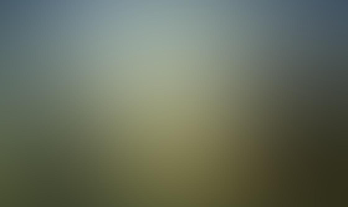 iPhone Tree Photo 18