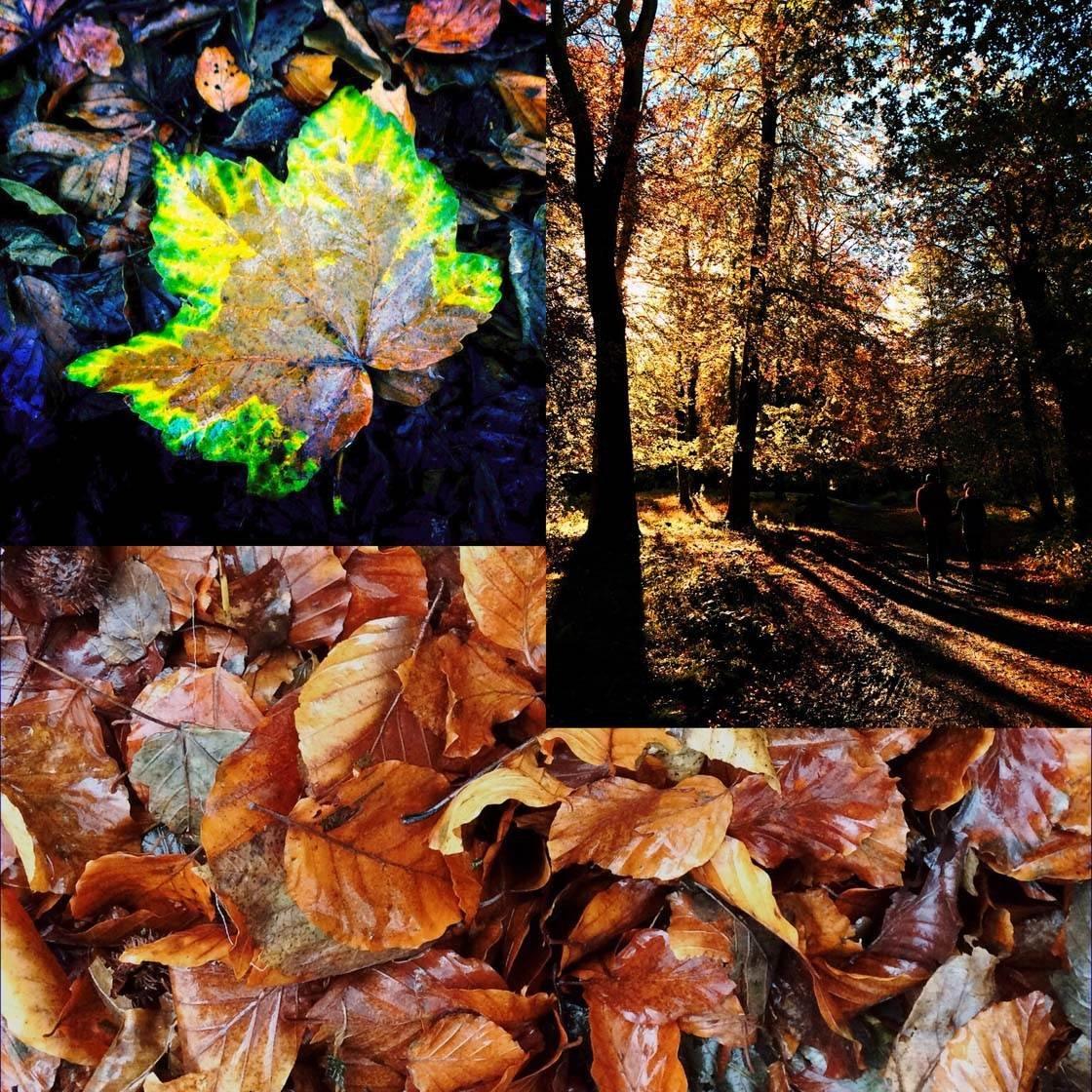 iPhone Photo Collages 10 no script