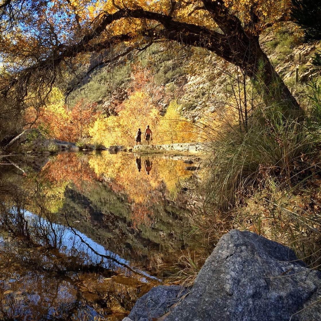 Fall iPhone Photos 18