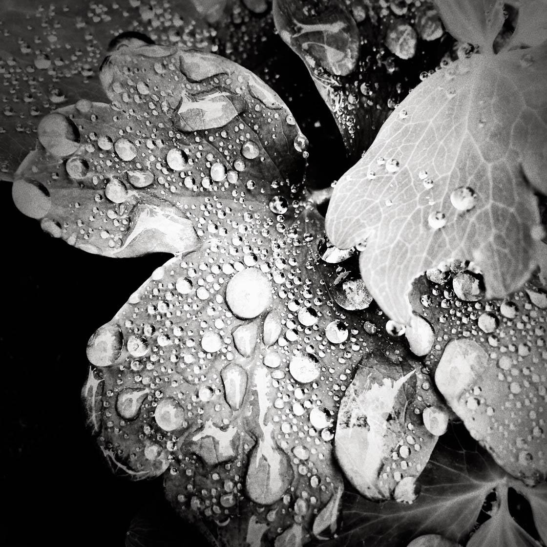Rainy Day iPhone Photos 25 no script